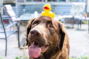 Benni duck on head - Dog Days Dog Daycare & Boarding St Paul