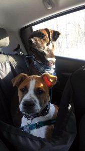 dogs in car-Dog Days Daycare & Boarding St. Paul