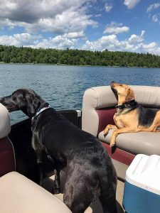 dogs in boat-Dog Days Daycare & Boarding St. Paul