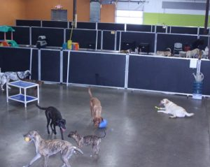 St. Paul dog daycare Dog Days 880 Grand Ave 55114 (651) 642-9663