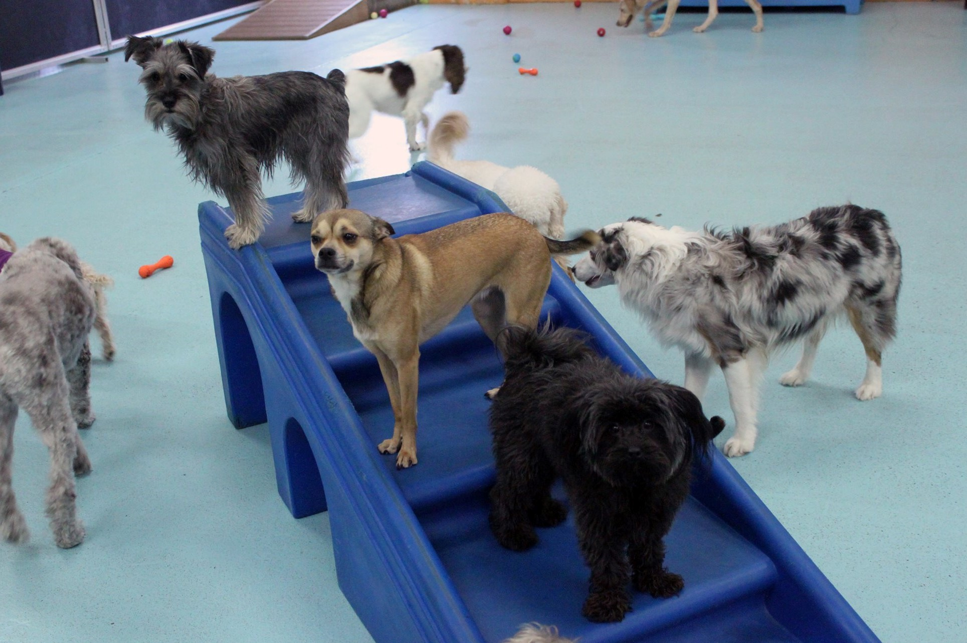 play Dog Daycare & Boarding Dog Days Vandalia St, St Pau