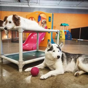 St. Paul dog daycare & boarding Dog Days (651) 341-6055