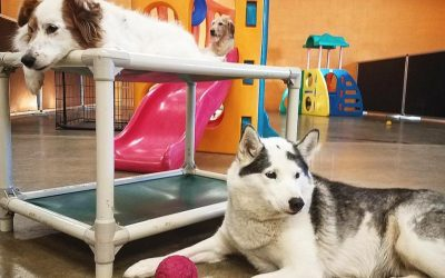 Looking for Trustworthy Dog Daycare in St. Paul?
