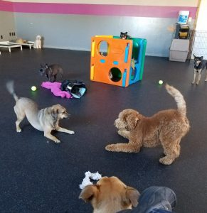 dog day care | Dog Days Daycare & Boarding St. Paul