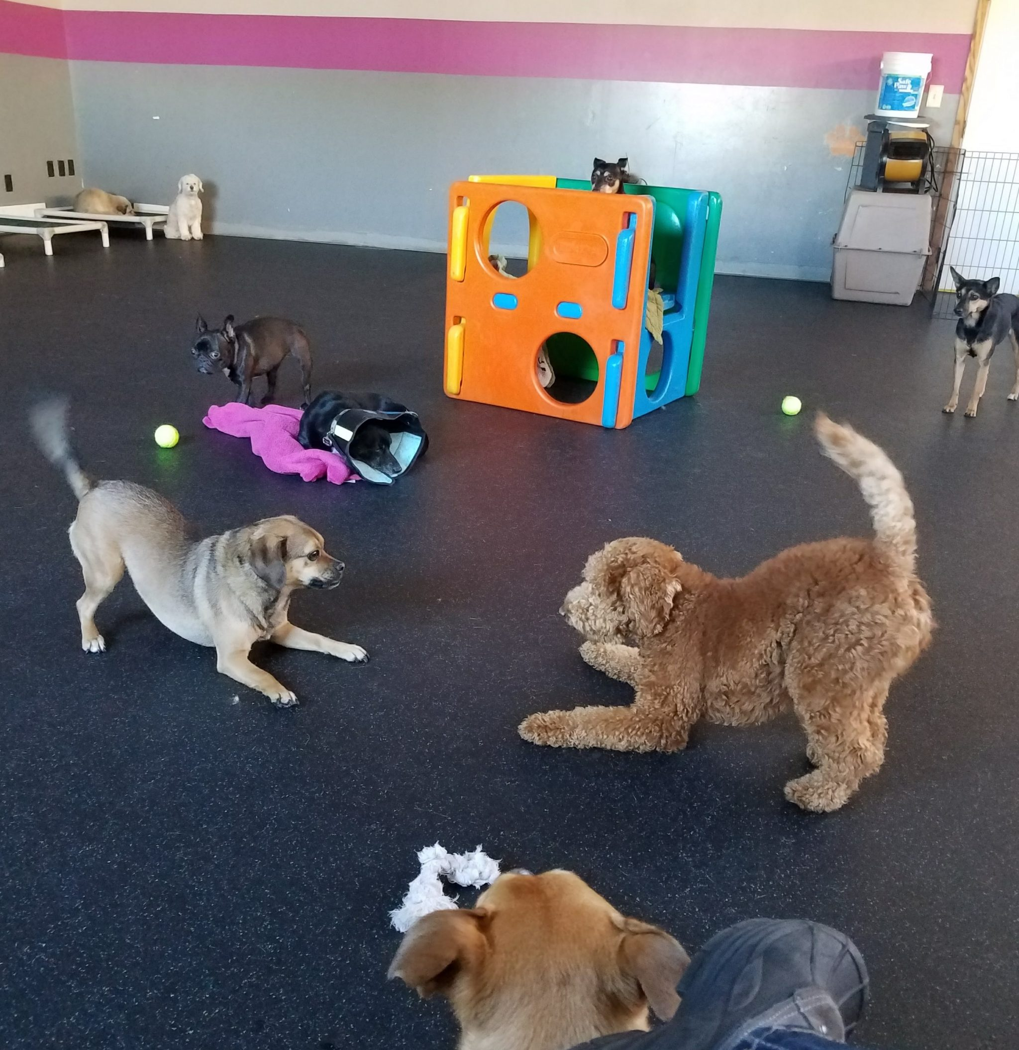 Dog Day Care Key West