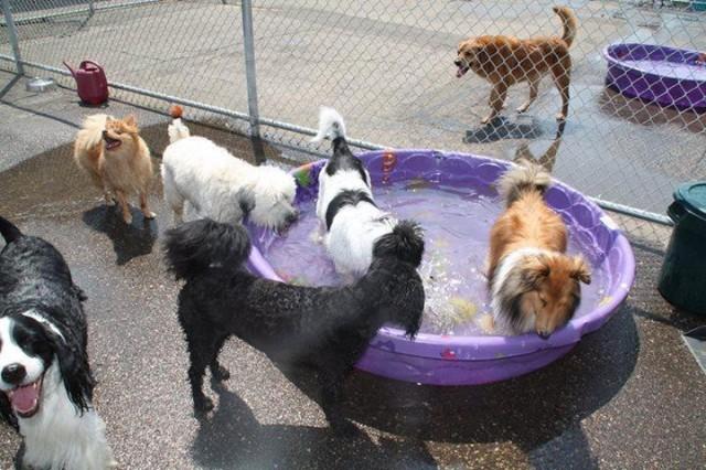 St. Paul dog daycare Dog Days University Ave (Capitol) (651) 341-6055