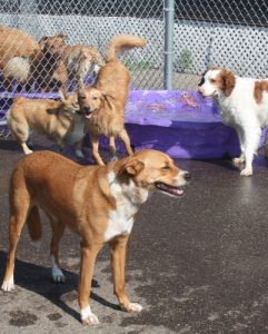 St. Paul dog day care | Dog Days Daycare & Boarding
