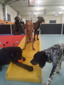 St. Paul dog daycare friends Dog Days Vandalia St