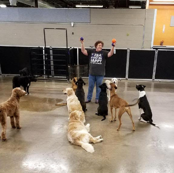 dog daycare St Paul, MN-Dog Days Daycare & Boarding