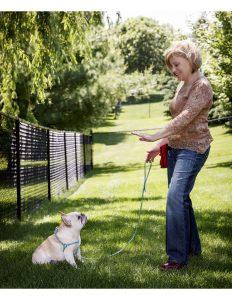 St. Paul dog training - Dog Days dog daycare & boarding - Linda Schindler Dog Traning