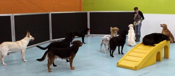 dog-daycare St Paul, MN-Dog Days Daycare & Boarding