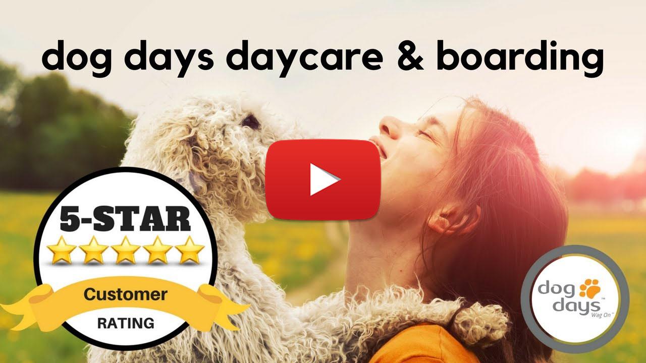 Dog Days Inc Reviews