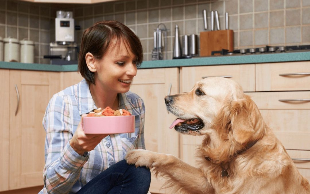 Your Healthy Dog: Toxic Foods & Bone Broth