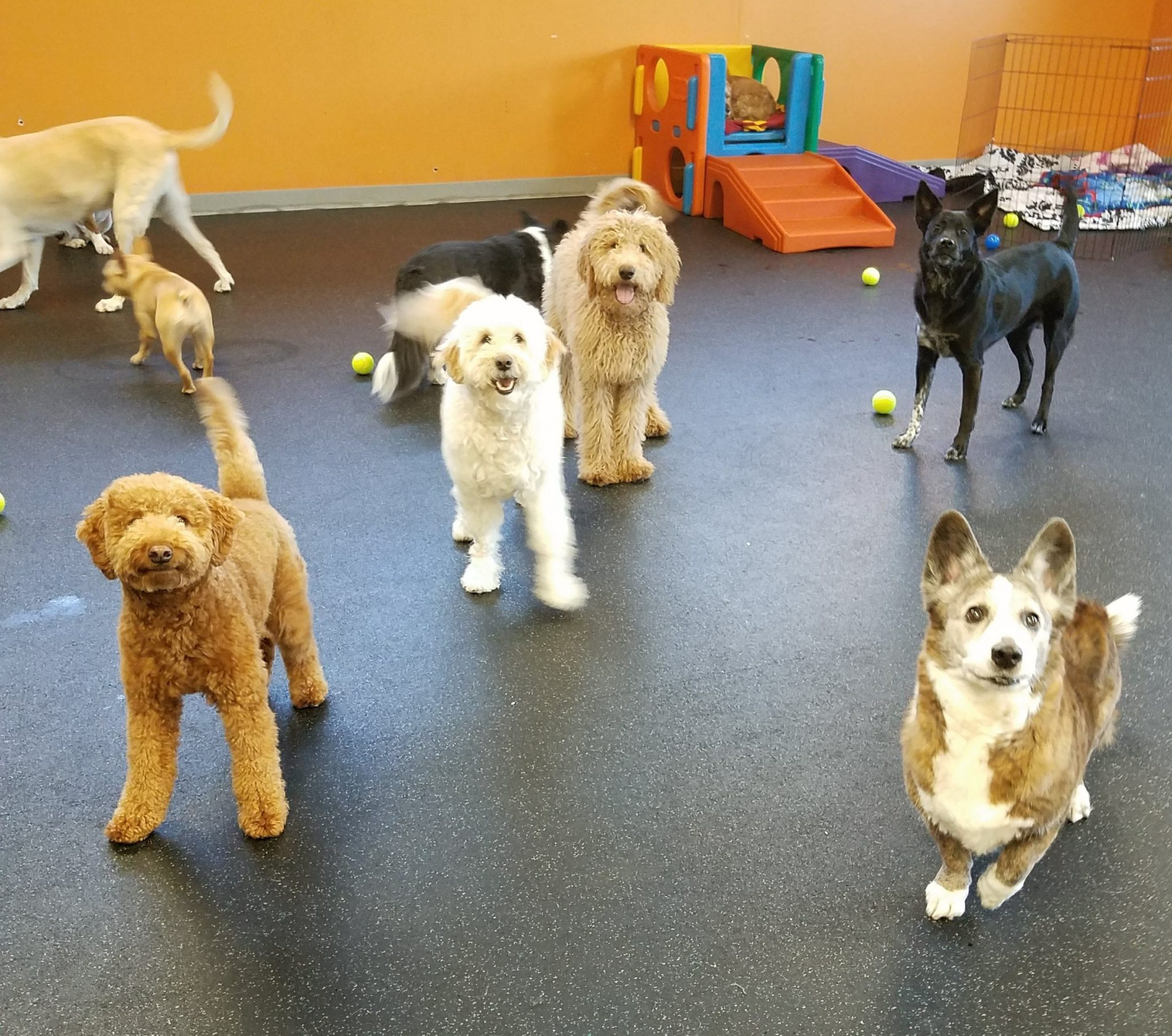 play time Dog Days Dog Daycare & Boarding Grand Ave, St Paul